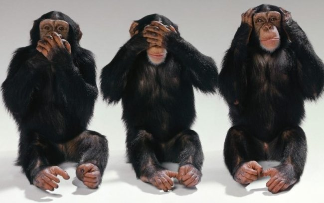 3-Monkeys-Example-For-Living-In-Denial
